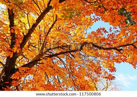Beautiful, sunny autumn in the park