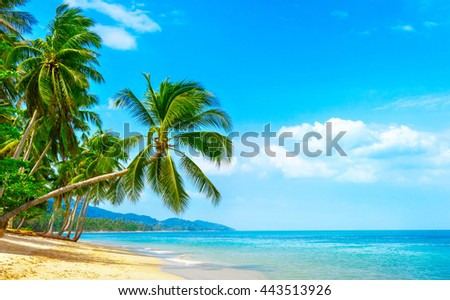 Beautiful sunny beach. View of nice tropical beach with palms around. Holiday and Vacation concept #443513926