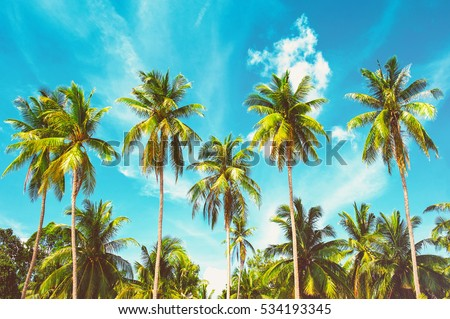 Beautiful sunny beach. View of nice tropical beach with palms around. Holiday and Vacation concept #534193345