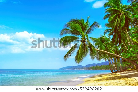 Beautiful sunny beach. View of nice tropical beach with palms around. Holiday and Vacation concept #539496202