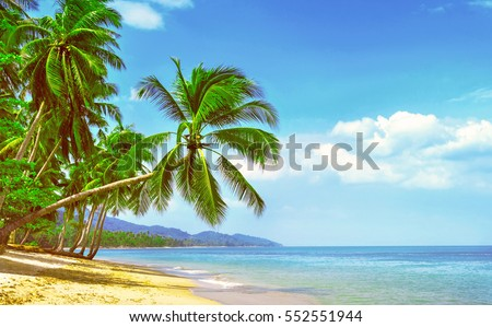 Beautiful sunny beach. View of nice tropical beach with palms around. Holiday and Vacation concept #552551944