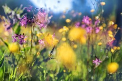 Beautiful sunny day in countryside. Colorful floral background.