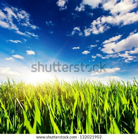 Beautiful sunny day in the field with blue sky. Overcast sky. Ukraine, Europe. Beauty world. - stock photo