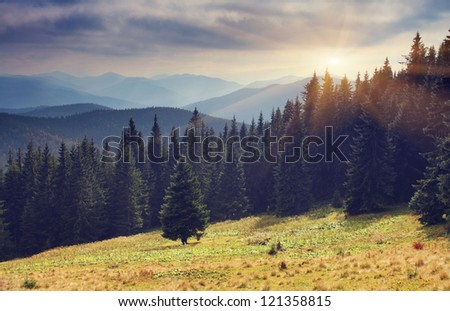 Beautiful sunny day is in mountain landscape. Carpathian, Ukraine. - Shutterstock ID 121358815