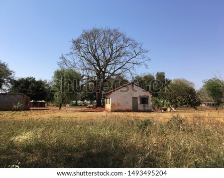 Beautiful sunny day with clear blue sky, Brazilian backwoods landscape with dry trees and vegetation and a simple house. Foto stock ©