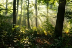 Beautiful sunny morning in the forest