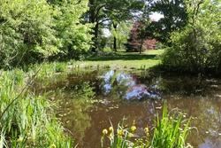 Beautiful sunny park at Inniswood Botanical Garden and Nature Preserve in Westerville Ohio. Scene includes colorful vibrant trees, a pond with reflections, yellow flag irises, tall grass