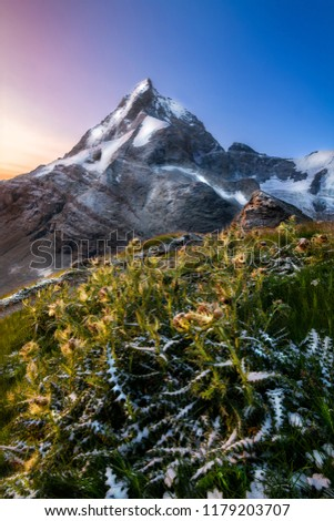 Beautiful sunrise colours with snow covered thistles in the foreground and the Matterhorn in the foreground #1179203707