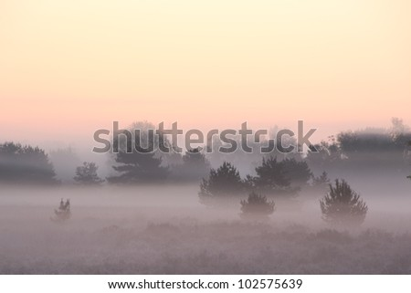 Beautiful sunrise in a foggy landscape