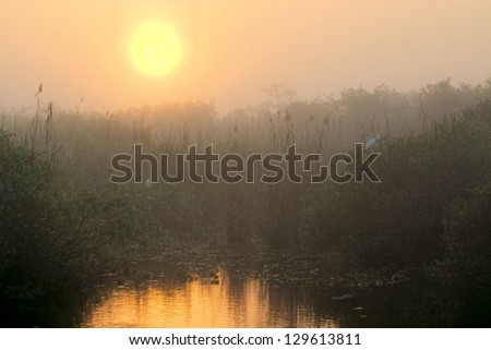Beautiful sunrise in the Florida Everglades national park