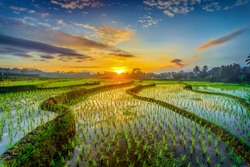Beautiful sunrise on the rice field central Java, Indonesia