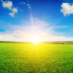 beautiful sunrise over field pea. Blue sky and white clouds.