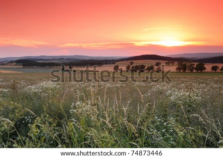 Beautiful sunrise over the blooming meadow full of flowers