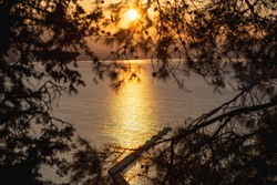 Beautiful sunrise silhouettes of pine branches filled with the golden light of the dawn sun against the backdrop of the sea. Alanya, Turkey.