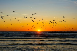 Beautiful Sunrise with seagulls in the sky