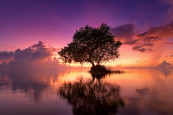 Beautiful sunrise with tree in the lake, Vivid color landscape photo, violet, purple theme, reflections