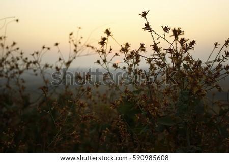 Beautiful Sunrise with Tree & Leaves #590985608
