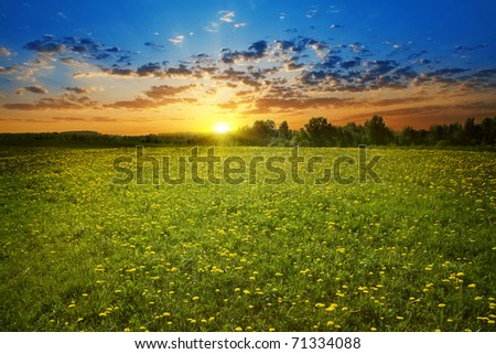 Beautiful sunset and dandelion field.