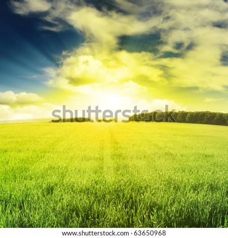 beautiful sunset and field