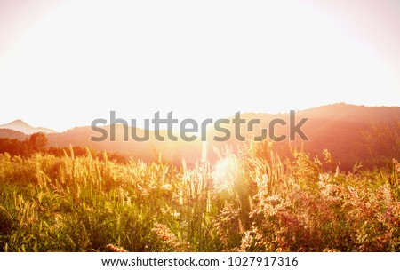 Beautiful sunset and grass flower on the meadows