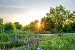beautiful sunset and sun with star rays in grean blooming meadow in summer evening