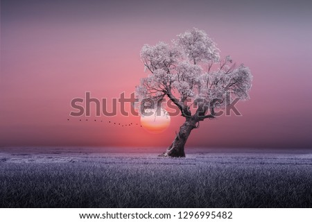 beautiful sunset and white leafy trees