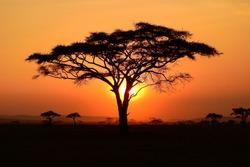 beautiful sunset at serengeti national park, tanzania