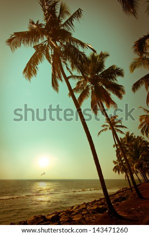 beautiful sunset at tropical...