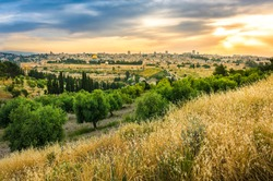 Beautiful sunset clouds over the Old City Jerusalem with Dome of the Rock, the Golden/Mercy Gate and St. Stephen's/Lions Gate; view from the Mount of Olives with olive trees and dry grassy hill