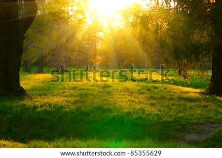beautiful sunset in autumn forest. Sunbeams struggle through the trees