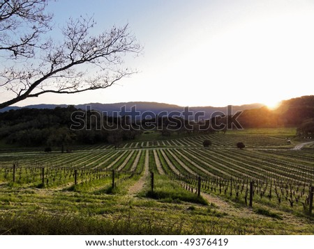 Beautiful sunset in Napa Valley in the spring