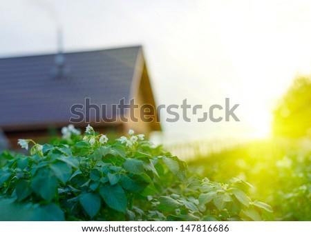 Beautiful sunset in peaceful green garden with garden house