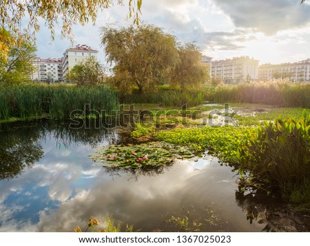 Beautiful sunset in the cloudy sky over a small pond. Water lilies in a small pond or swamp. Pond on the outskirts of the city.