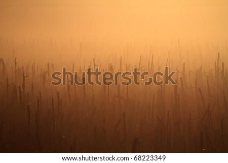 Beautiful sunset in the corn field