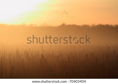Beautiful sunset in the corn field