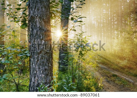 beautiful sunset in the woods