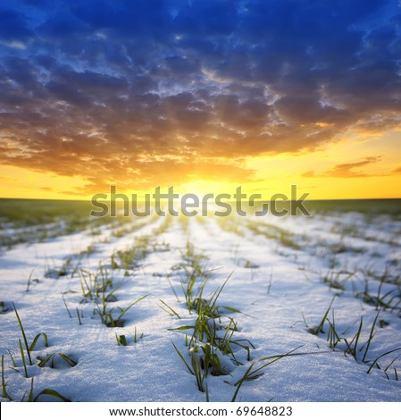 beautiful sunset is the field of green grass in to snow
