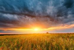 Beautiful sunset landscape. Sunset cloudy sky above summer field.