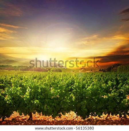 Beautiful Sunset.Nature Landscape - stock photo