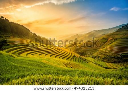 Beautiful Sunset on terraced rice field in harvest season in MuCangChai, Vietnam ストックフォト ©