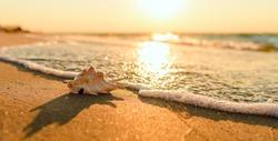 Beautiful sunset on the Black Sea. Panoramic shot. Sea wave near a beautiful shell. Focusing on the shell.