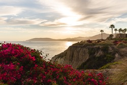 beautiful sunset on the coast with bright red flowers in the foreground
