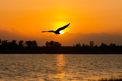 beautiful sunset on the river and Silhouette of eagle flying on sky