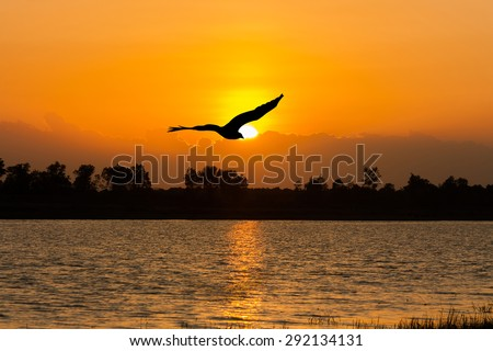beautiful sunset on the river and Silhouette of eagle flying on sky #292134131