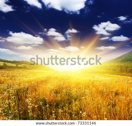 beautiful sunset over field with yellow grass