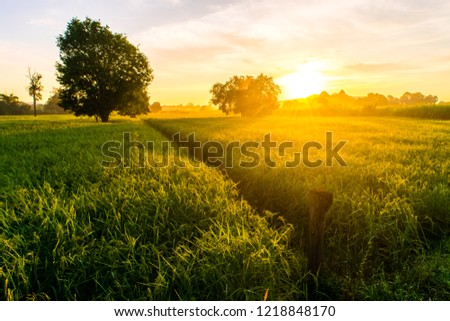 Beautiful sunset over the paddy fields in Thailand. #1218848170