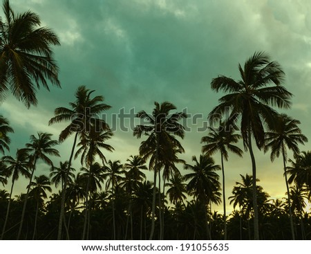 Beautiful sunset palm trees and azure blue green yellow sky