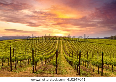 Beautiful Sunset Sky in Napa Valley Wine Country on Spring Vineyards , Mountains. Stock fotó ©