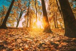 Beautiful Sunset Sunrise Sun Sunshine In Sunny Autumn Forest Park. Sunlight Through Woods In Autumn Forest Landscape. Shadows On Snow.