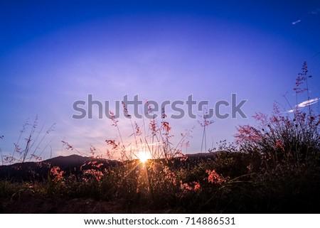 Free Photos Beautiful Vintage Grunge Landscape Springsummer Sunset